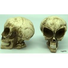 Medium Alien Skull Polyresin Sculpture